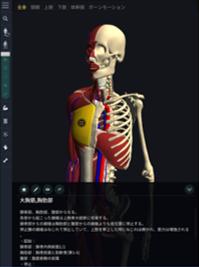teamLab body